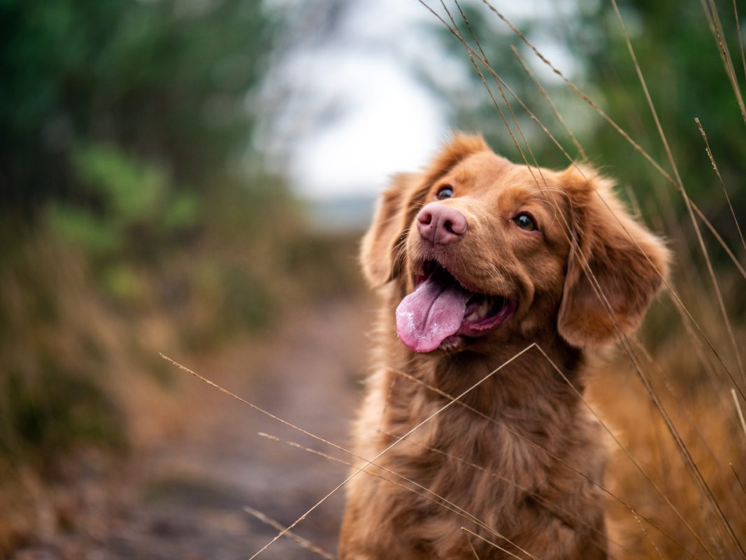 cbd for pets scaled