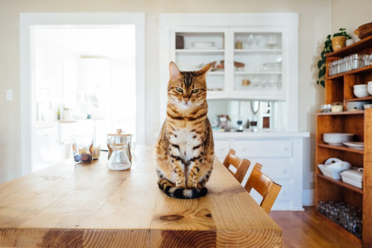 Why Is CBD Good For Cats